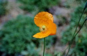 flower-765921_640