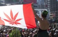 La légalisation du cannabis ne règle pas le problème : il en crée d'autres
