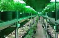 Légalisation de la marijuana : ne suivons pas les traces du Colorado