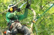 Arboplus domine l'arboriculture résidentielle au Québec